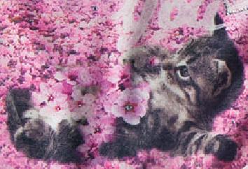Βρεφικό παιδικό σετ γατούλα με ροζ τούλινη φούστα