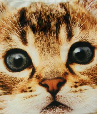 Βρεφική παιδική φούστα γατάκι